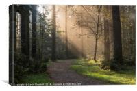 Forest Sunshine  , Canvas Print