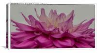 Colour Explosion, Canvas Print