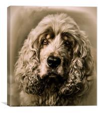 Bailey, Canvas Print