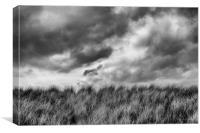 Grasslands, Canvas Print