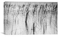 Ripples, Canvas Print