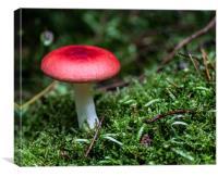 Red cap, Canvas Print