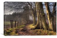 HDR of Trees in Ousbrough Wood, Canvas Print