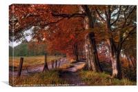 Ousbrough Woods-Autumnized, Canvas Print