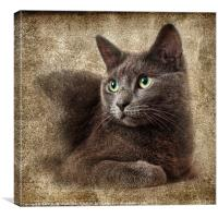 Mitzy The Cat, Canvas Print