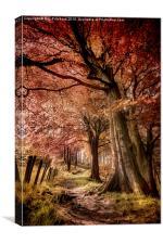 Ousbrough Woods, Canvas Print