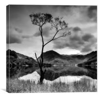 Lone Tree at Buttermere, Canvas Print
