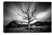 Dead Tree round Derwentwater , Canvas Print