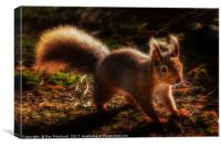 Red Squirrel or Squizz , Canvas Print