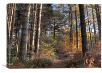 Autumn In Beamish Woods, Canvas Print