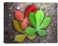 Seasoned Leaves, Canvas Print