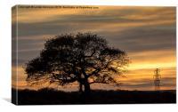 Lone Tree Sunset, Canvas Print