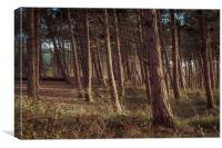 Formby Pinewoods , Canvas Print