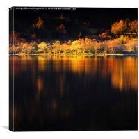 Autumn Gold, Loch Eck, Argyll, Canvas Print