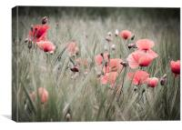 Poppies , Canvas Print