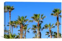 Palm trees  , Canvas Print