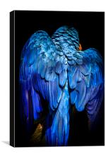 Blue-and-yellow macaw , Canvas Print