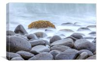 tranquil seaweed, Canvas Print