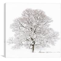 Winter Tree , Canvas Print