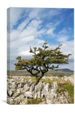 Limestone Pavement , Canvas Print