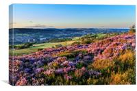 Heather in flower at sunset , Canvas Print