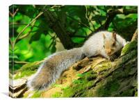 Contented Squirrel , Canvas Print