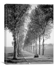 Tree Lined Road France , Canvas Print