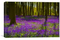 Bluebell Wood Micheldever , Hampshire .England , Canvas Print