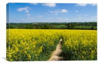 Footpath through Rapeseed field , Canvas Print