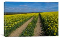 Rapeseed fields ,Sussex, Canvas Print
