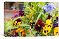 Garden Plants spilling colour, Canvas Print
