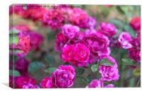 The Power of Pink, Canvas Print