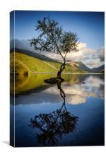 Lone Tree, Llyn Padarn, Snowdonia, Canvas Print