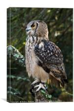 A Bengal Owl sitting on a tree branch., Canvas Print