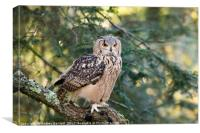 A Bengal Owl sitting in a tree., Canvas Print