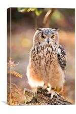 A Bengal Owl sitting among Autumn leaves., Canvas Print