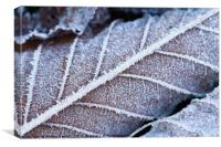 Frozen leaves in winter, Canvas Print