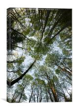 Forest Canopy, Canvas Print