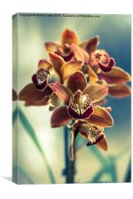 Colourful orchids, Canvas Print