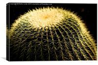 Cactus, Canvas Print