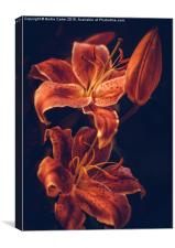 Red lilies, Canvas Print