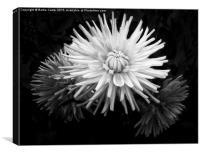 Flowers in bloom, Canvas Print