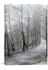 Carriage Drive to Riversvale Hall 1930s, Canvas Print