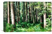 Sandringham woods, Canvas Print