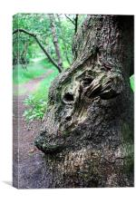 Face in the Bark, Canvas Print