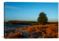 New Forest in golden light, Canvas Print