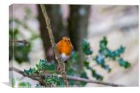 A beautiful Robin Red Breast in the New Forest Ham, Canvas Print