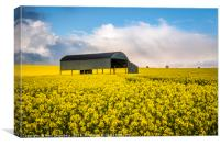 Barn in Rapeseed, Canvas Print
