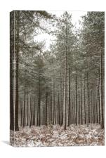 Winter In the New Forest, Canvas Print