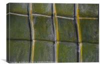 Towards green, Canvas Print